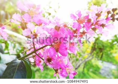 Pink Flowers Large Bouquet On Tree Stock Photo Edit Now 1084947491