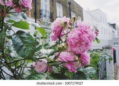Pink Flowers in London
