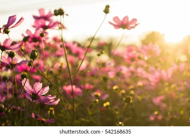 pink flowers in morning
