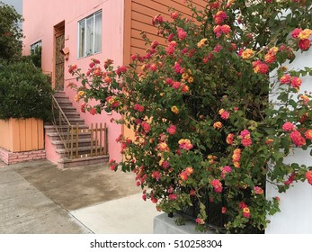 Pink flowers next to a pink house.