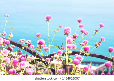 Pink flowers on background of blue sea in the summer