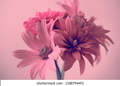 pink flowers on a pink background, bouquet.
