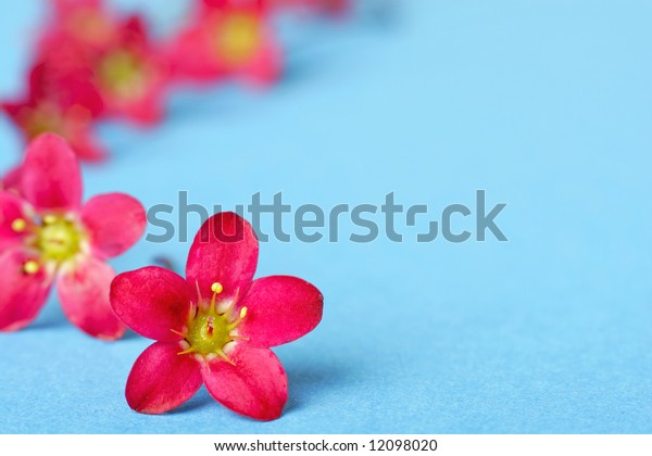 Pink flowers on blue background