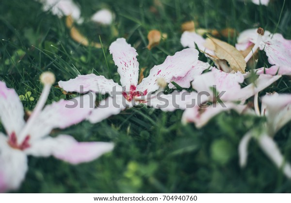 Pink flowers on green grass