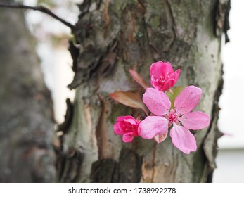 Pink flowers on the trunk of an old tree