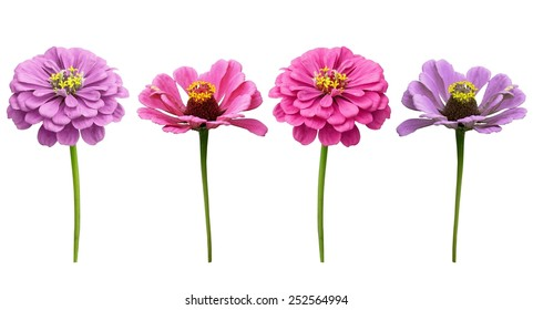 Single flower white background images stock photos vectors pink flowers on a white background mightylinksfo