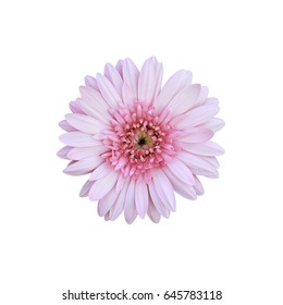 Pink flowers on white background.