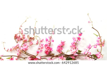 Pink flowers on white background beautiful stock photo edit now pink flowers on a white background the beautiful flower are blooming these flower called mightylinksfo