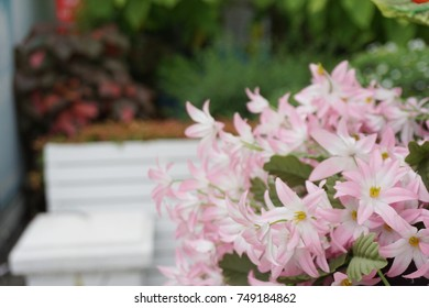 Pink flowers in the park.