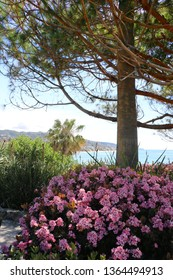Pink flowers, plants and a tree in the foreground near the ocean