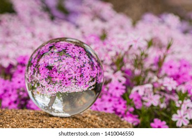 Pink Flowers reflection in a crystal ball