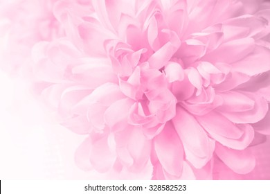 Pink flowers in soft style for background