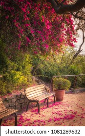 Pink flowers at spring time in Islamabad Pakistan