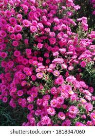 Pink flowers summer naturee garden