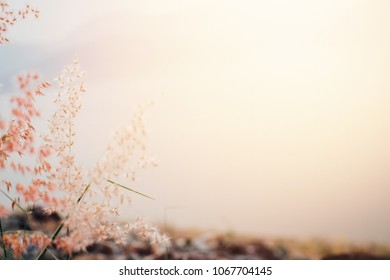 Pink flowers for travel trip background