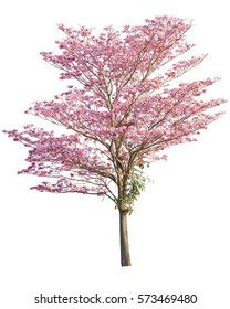 Pink flowers tree isolated on white background. This has clipping path.
