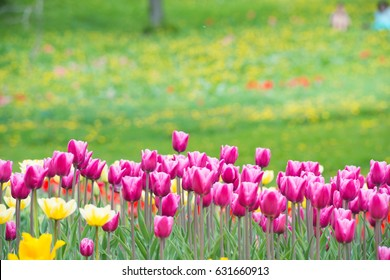 Pink flowers tulips in the green beautiful park