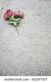 Pink flowers under snow on a grave in Paris, the Pere-Lachaise cemetery