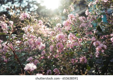 pink flowers under the sunlight