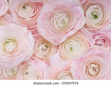 Pink flowers images stock photos vectors shutterstock pink flowersckground of delicate pink flowers mightylinksfo