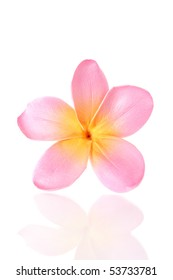 pink frangipani flower isolated on white. plumeria