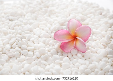 Pink frangipani flower on pile of white stones background- Zen spa background