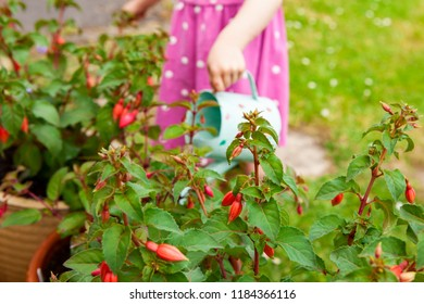 Pink fuchsia, with little girl in background watering plants