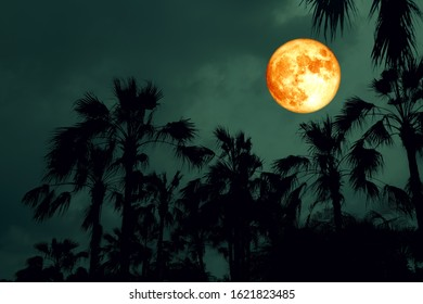 pink Full Hunger Moon on night sky back silhouette palm tree, Elements of this image furnished by NASA