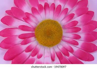 pink gerber daisey  artificial flower