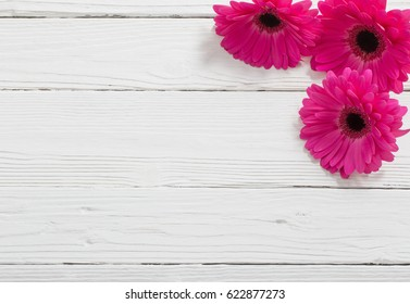 pink gerber on white wooden background