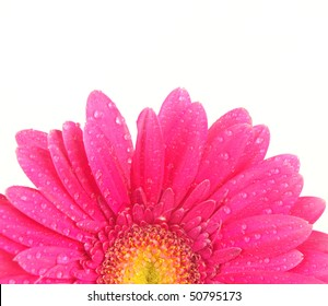 Pink gerbera blossom isolated on white background