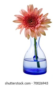 Pink gerbera in blue glass jug