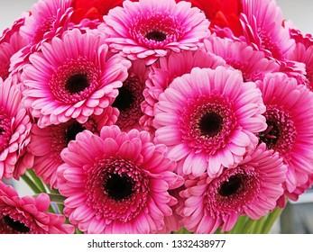 Pink gerbera daisy bouquet closeup