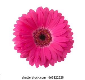 Gerbera images stock photos vectors shutterstock pink gerbera flower isolated on white background mightylinksfo