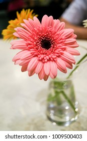 Pink Gerbera on the table.
