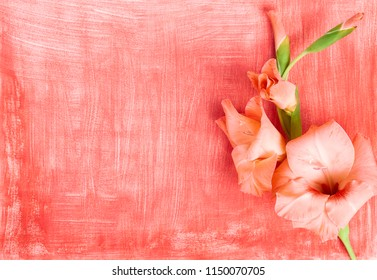 Pink gladiolus flower composition on red canvas hand painted with white brush strokes, flat lay, top view