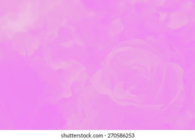 pink gradient rose flower