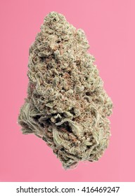 Pink Grapefruit Marijuana Bud on a Pink Background