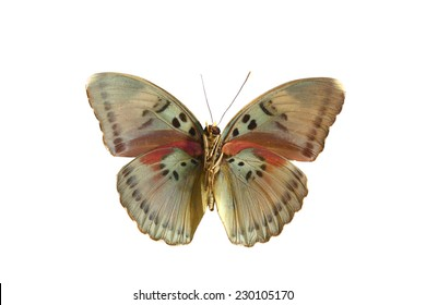 pink green  butterfly isolated, set of realistic amazing tropical butterflies and alive  bug , zoology,wild ,entomology, beautiful wing collection ,insect animal stuff icon