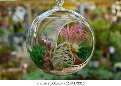 Pink and green color air plants (tillandsia)  inside a glass bubble on a green fuzzy background