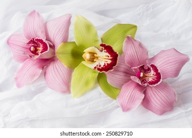 Pink and green orchids - white background