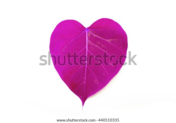 pink heart leaf isolated on white background