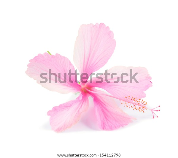Pink hibiscus flower on white background
