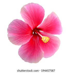 Pink Hibiscus on white background with clipping Path