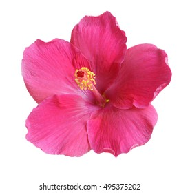 Pink Hibiscus on white background with path