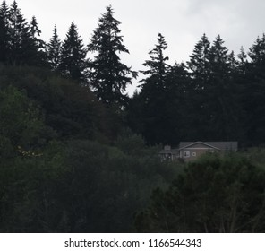 A pink house in dark Douglas fir trees in Washing state