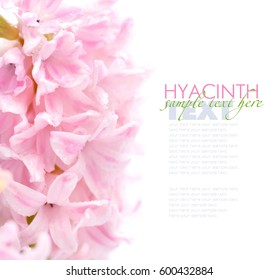 Pink hyacinth with drops (of water with space for your text)