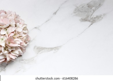 Pink hydrangea blossom frames open white marble copy space.