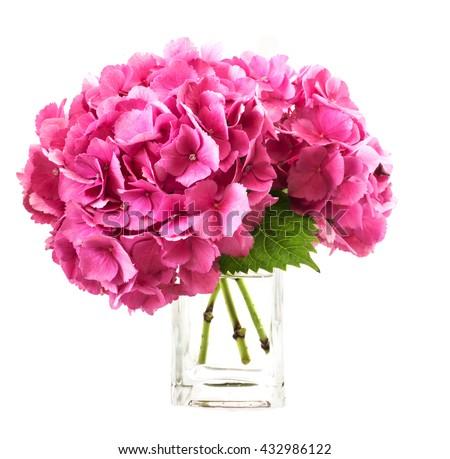 Pink Hydrangea Inside Glass Vase Over Stock Photo Edit Now