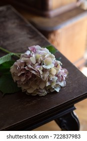 Pink hydrangea laying on dark brown wooden rustic table